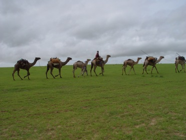 Abeche Camel Caravan