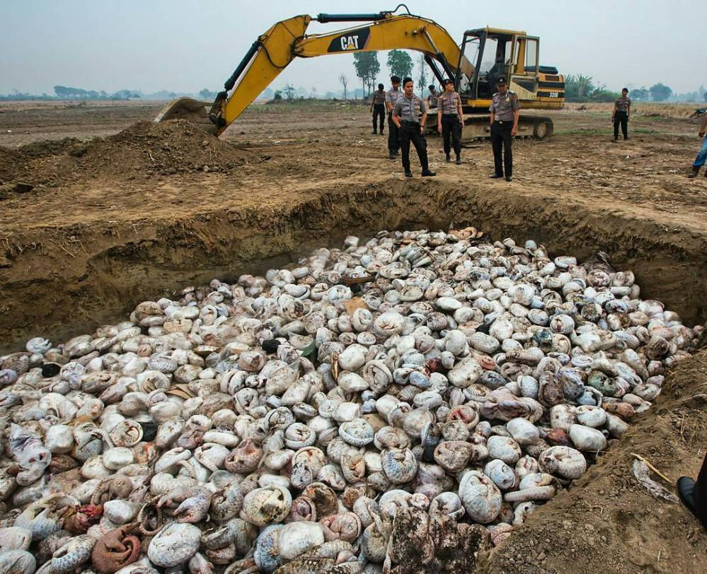 Photo credit: http://projectbiwan.com/madhya-pradesh-curbs-pangolin-smuggling-to-china-with-82-arrests-from-9-states/